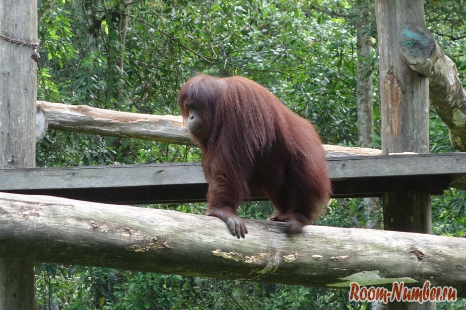 zoopark-lok-kawi-v-kota-kinabalu-6