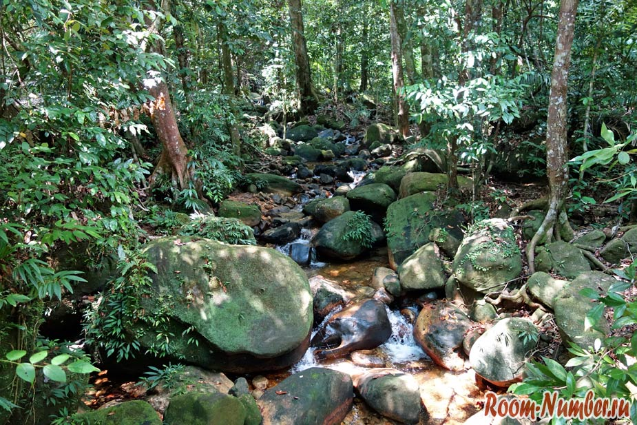 Permai-Rainforest-12