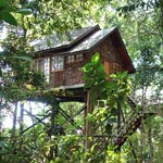 Permai-Rainforest-150