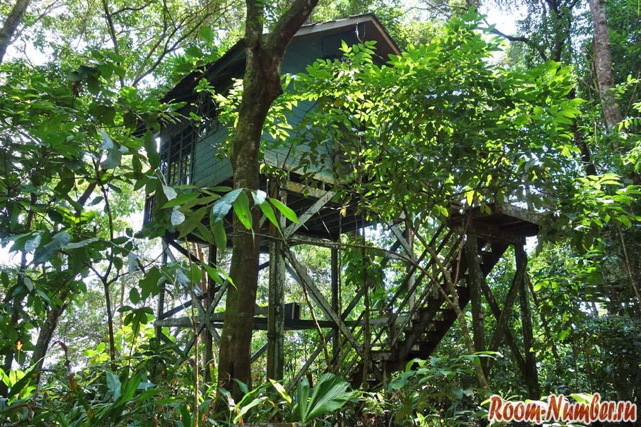 Permai-Rainforest-3