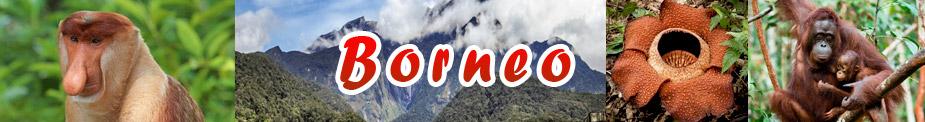 Кучинг Борнео