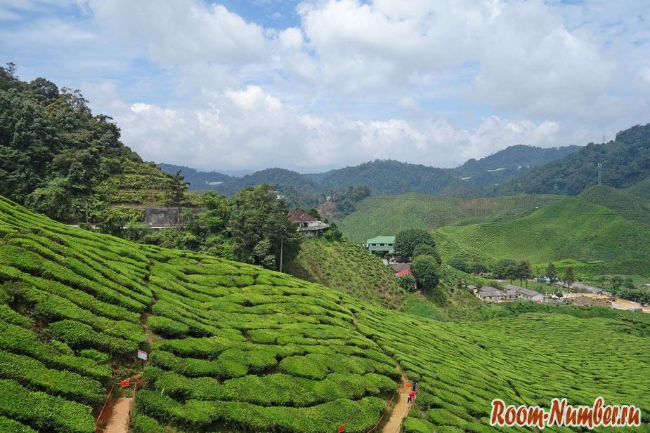 Камерон Хайлендс, Малайзия. Курорт в горах с грядками и чаем