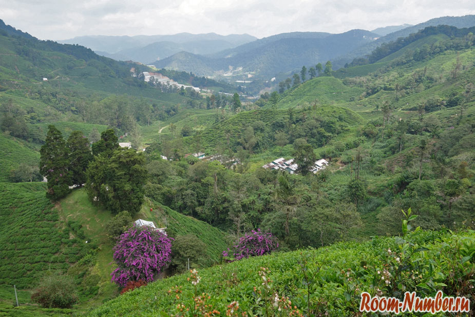 cameron-highlands-14
