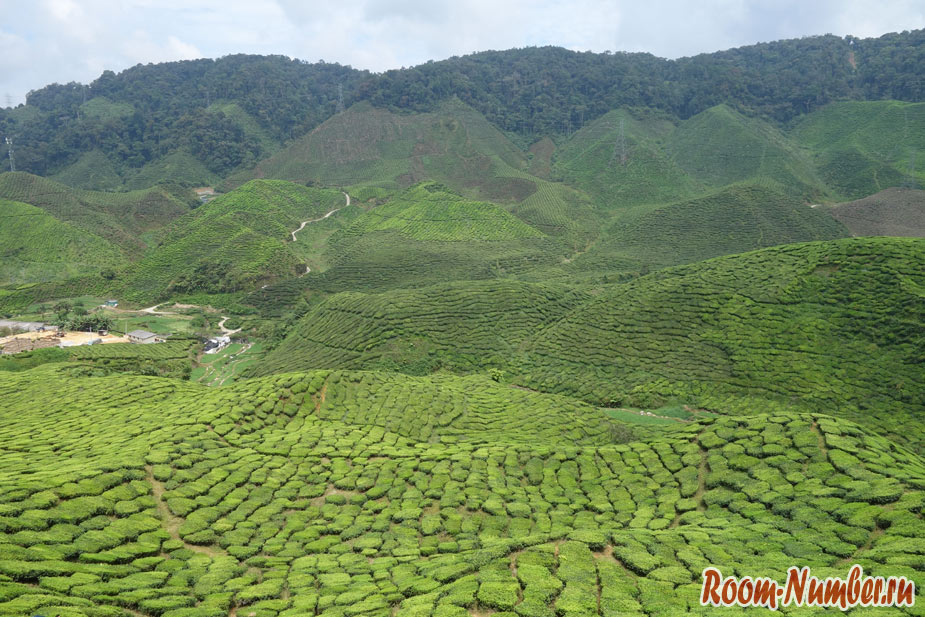 cameron-highlands-2