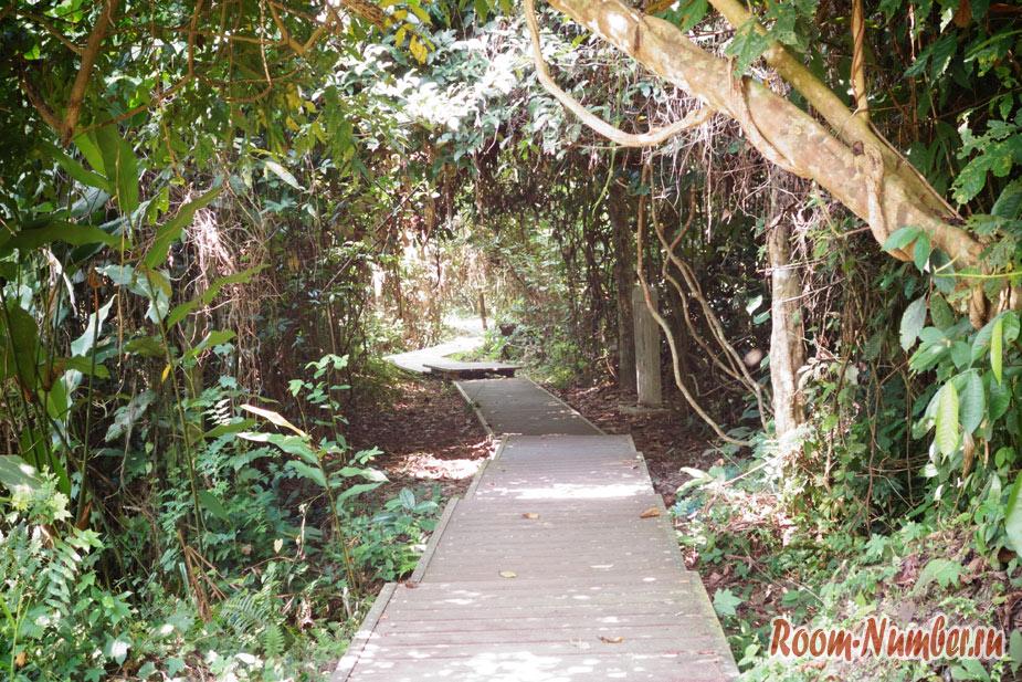 Таман Негара, Малайзия. Национальный парк и древнейший дождевой лес