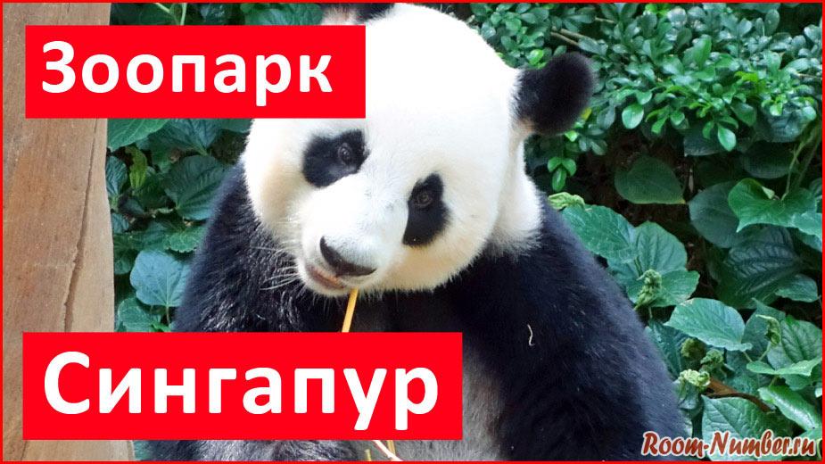 Зоопарк в Сингапуре. Фото, цены, как добраться и где увидеть панду
