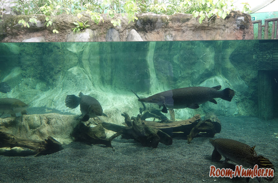 zoopark-v-singapure-1