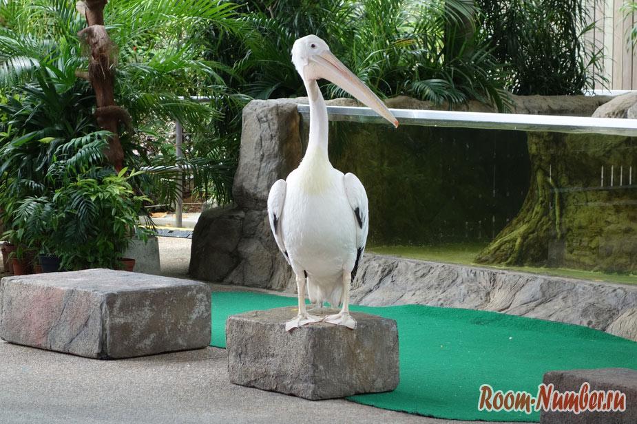zoopark-v-singapure-14