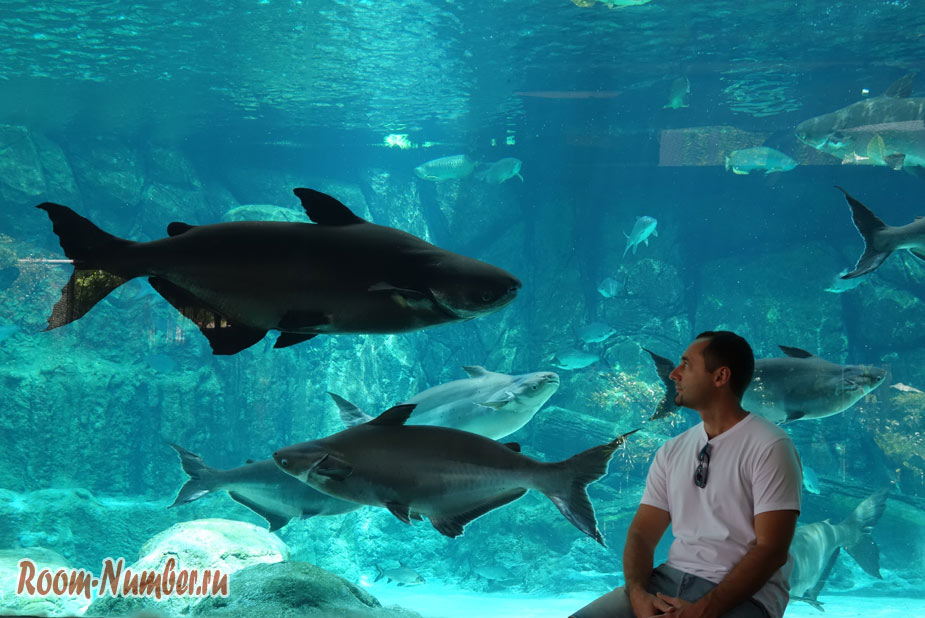 zoopark-v-singapure-2