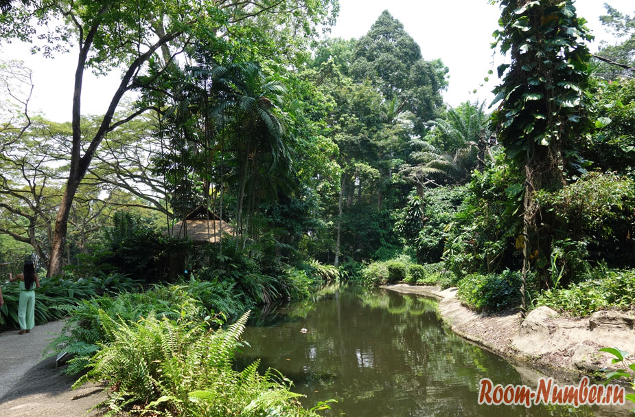 zoopark-v-singapure-33