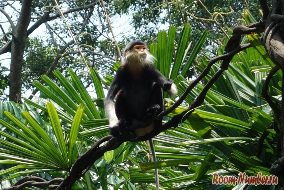 zoopark-v-singapure-34