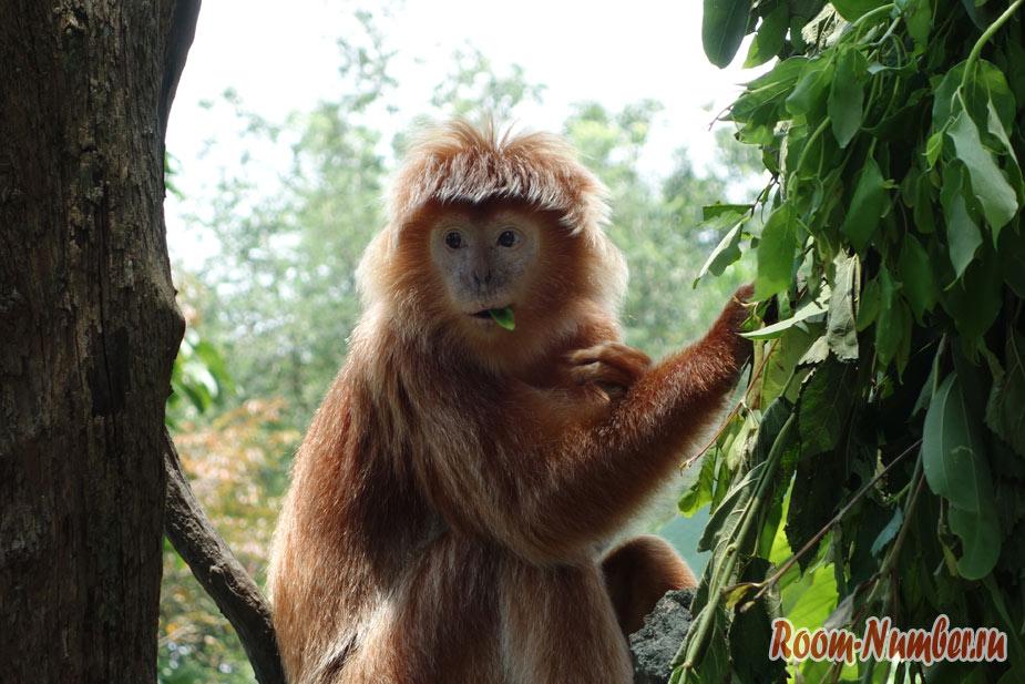 zoopark-v-singapure-35