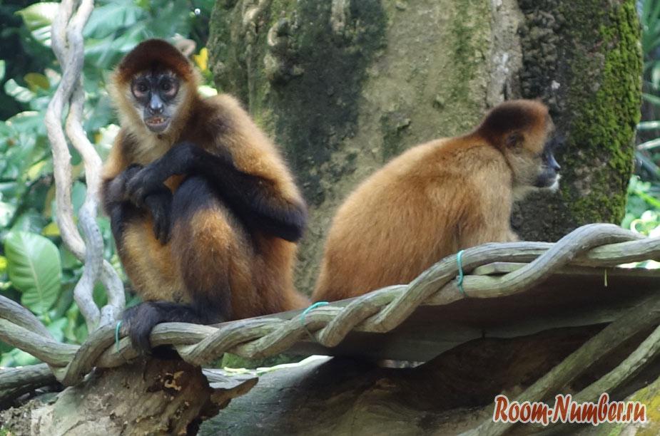 zoopark-v-singapure-36