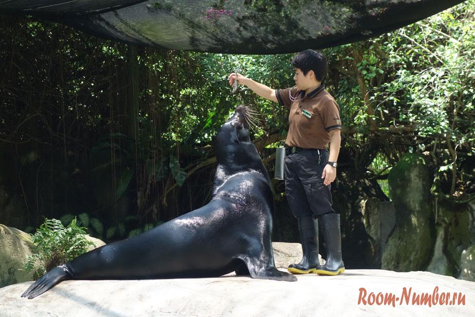 zoopark-v-singapure-37