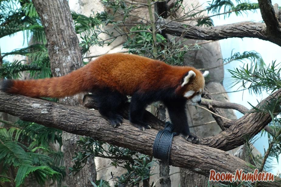 zoopark-v-singapure-4