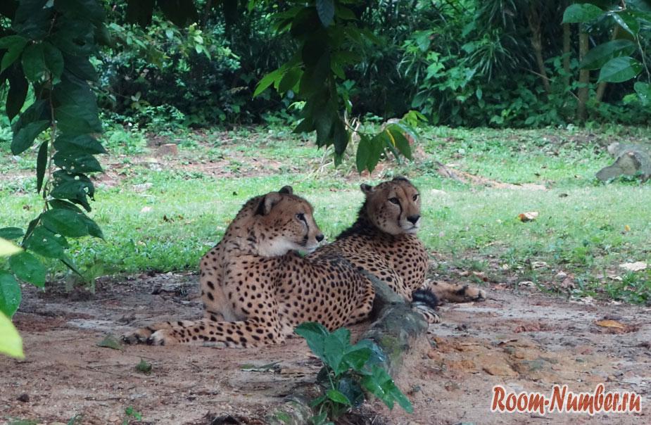 zoopark-v-singapure-43