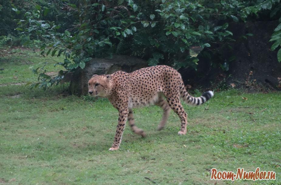zoopark-v-singapure-44