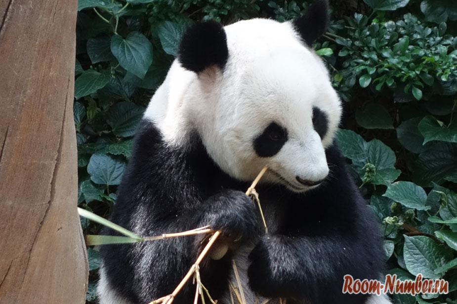 zoopark-v-singapure-8