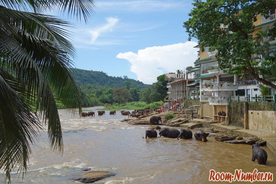 Пиннавела, Шри Ланка. Увидеть слонов прямо из отеля