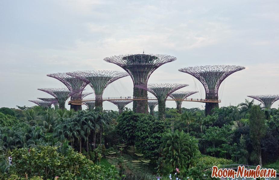 Сады у залива в Сингапуре. Супер деревья и оранжерея «Облачный лес»