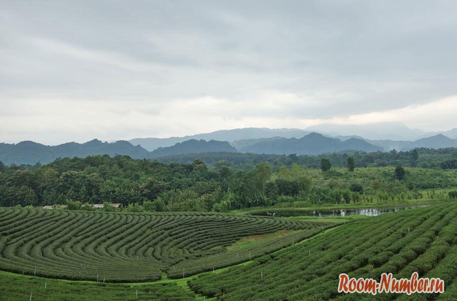 Мае Салонг, Таиланд. Чайные плантации, горные племена, туман и холод