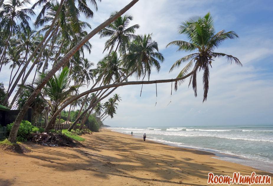 Ваддува, Шри Ланка. Дикий пальмовый пляж