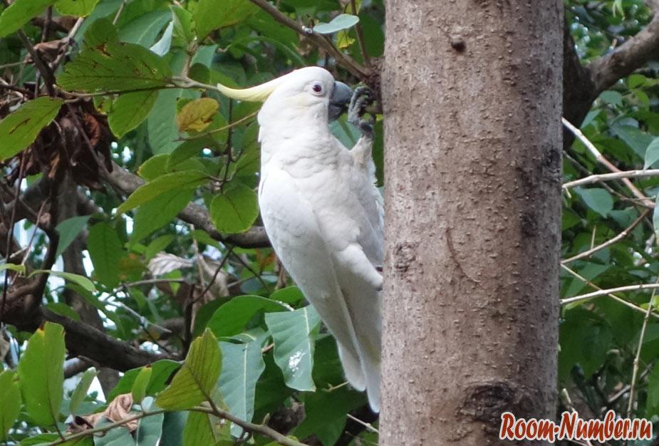 hk-park-parrot