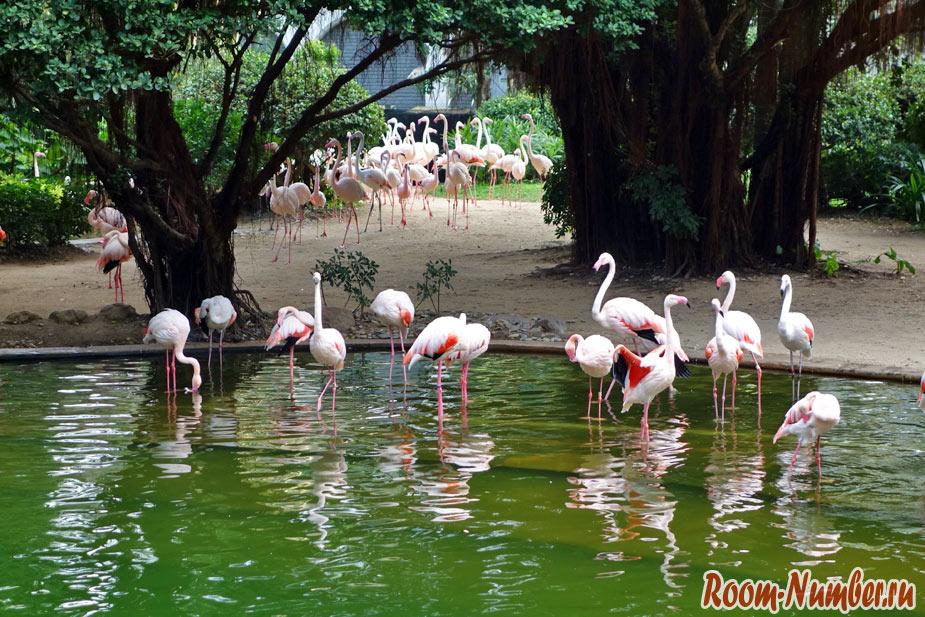 kowloon-park-3