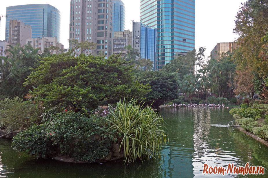 Kowloon Park. Розовые фламинго в Гонконге!