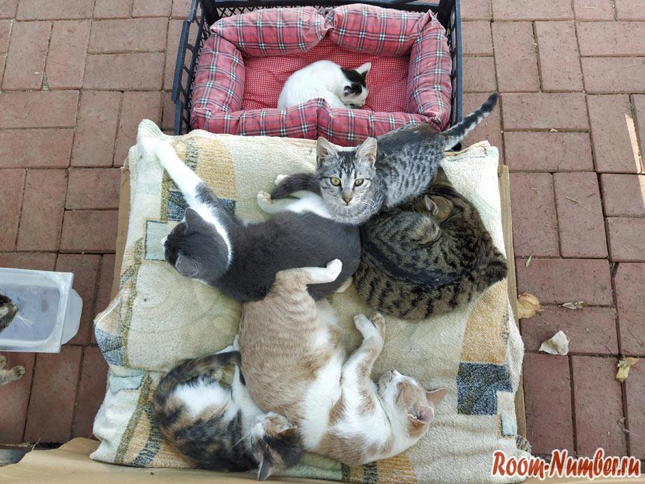 cats-turkey-2