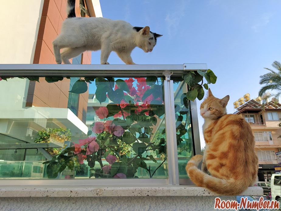 cats-turkey-4