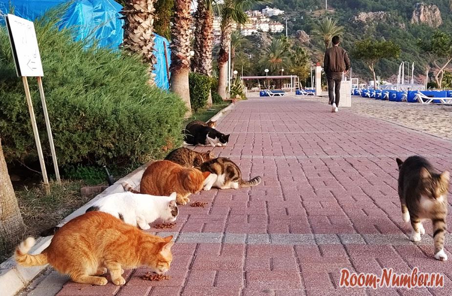 Кошки в Турции. Домики для кошек в Алании