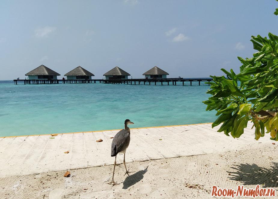 Мальдивы и коронавирус. Какая обстановка сейчас на островах