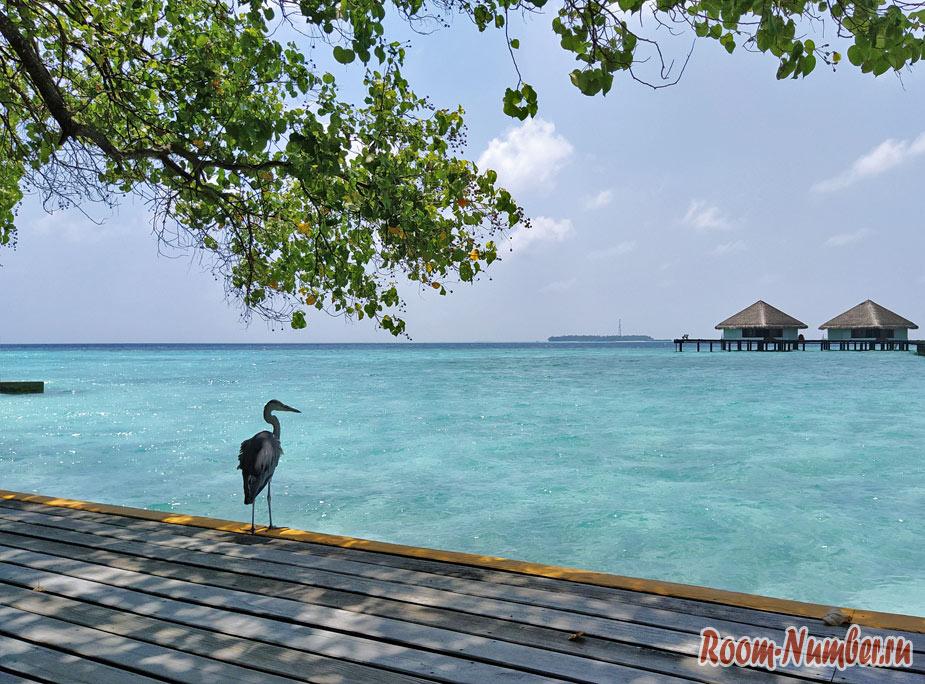 ostrov-Adaaran-Club-Rannalhi-7