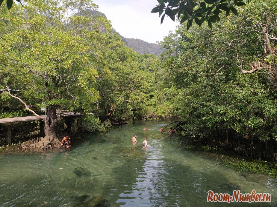 mangrovui-les-1