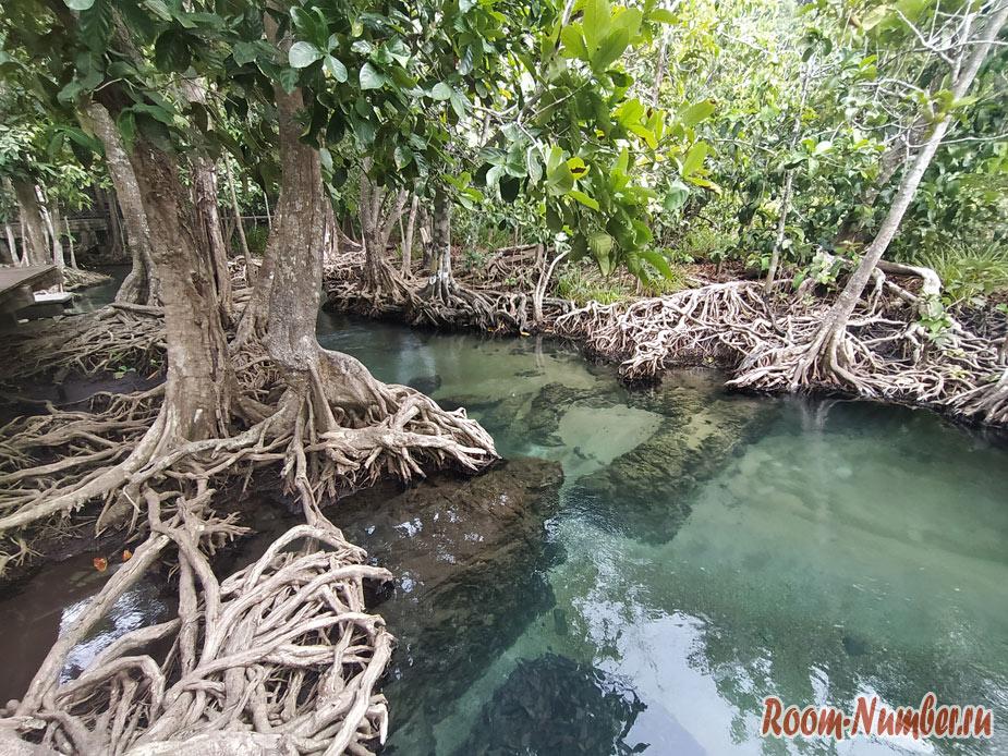 mangrovui-les-10
