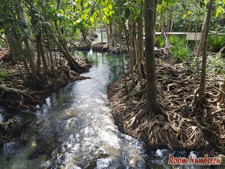 mangrovui-les-11