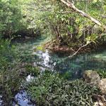 mangrovui-les-12