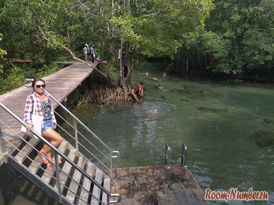 mangrovui-les-2