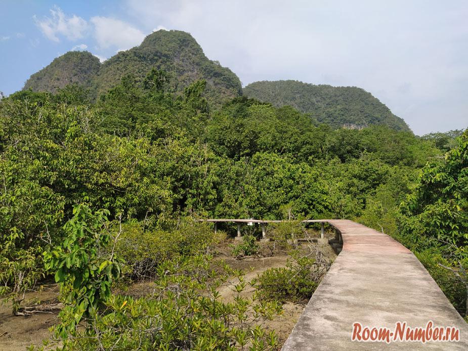 mangrovui-les-5