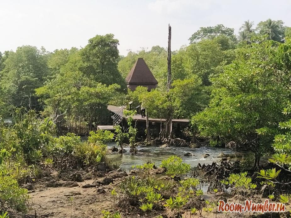 mangrovui-les-6