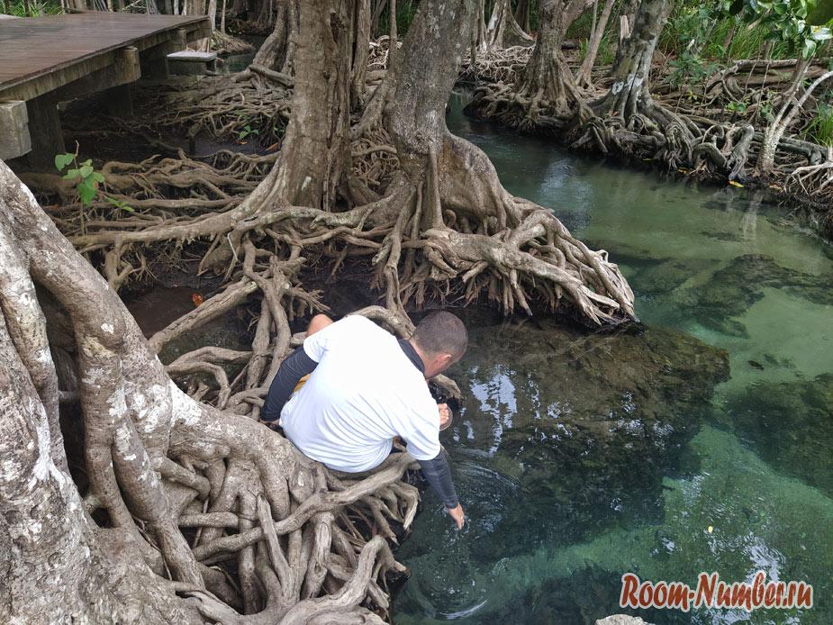 mangrovui-les-8