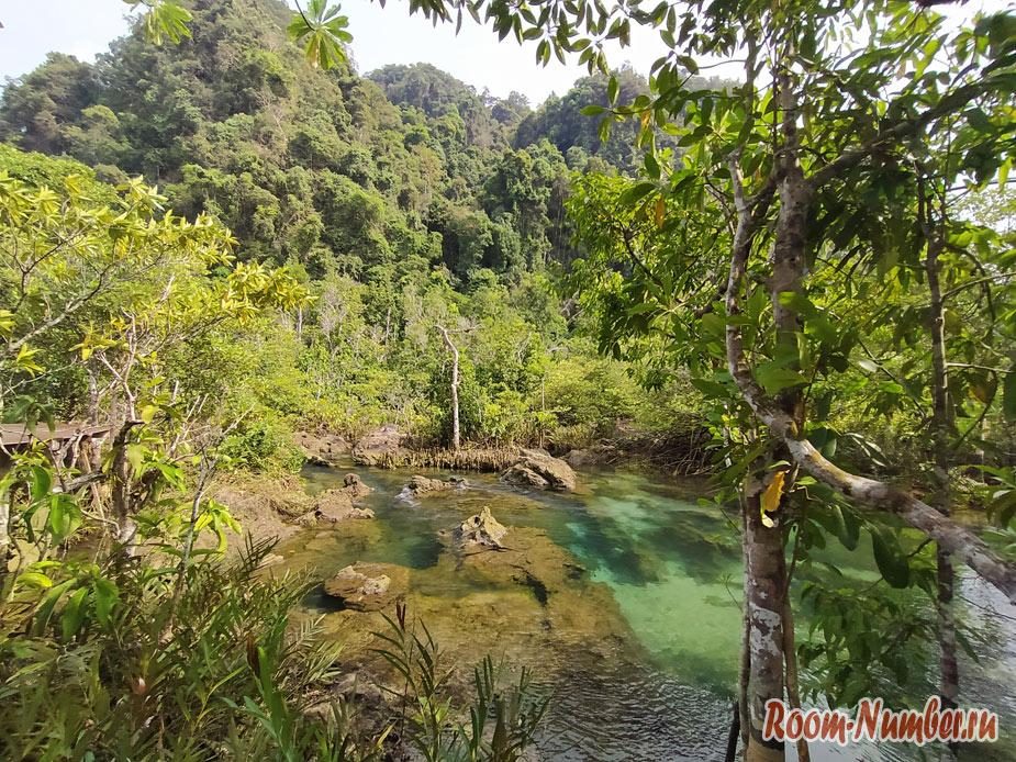 mangrovui-les-9